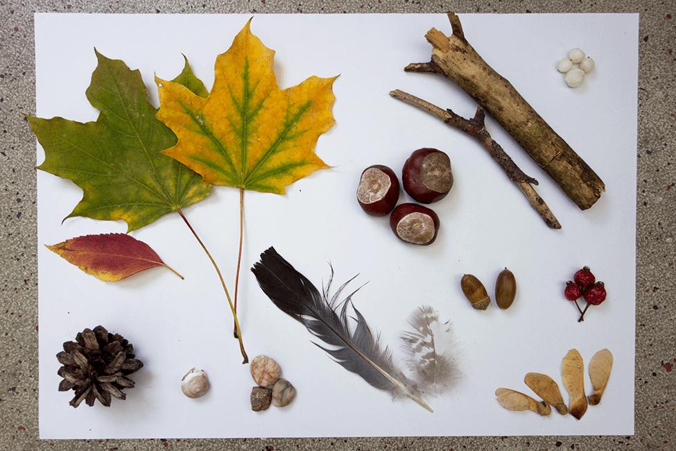 Komm, wir machen eine Herbst-Schatzsuche!