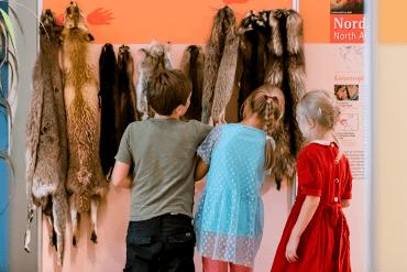 Kindergeburtstag Naturkundemuseum Potsdam