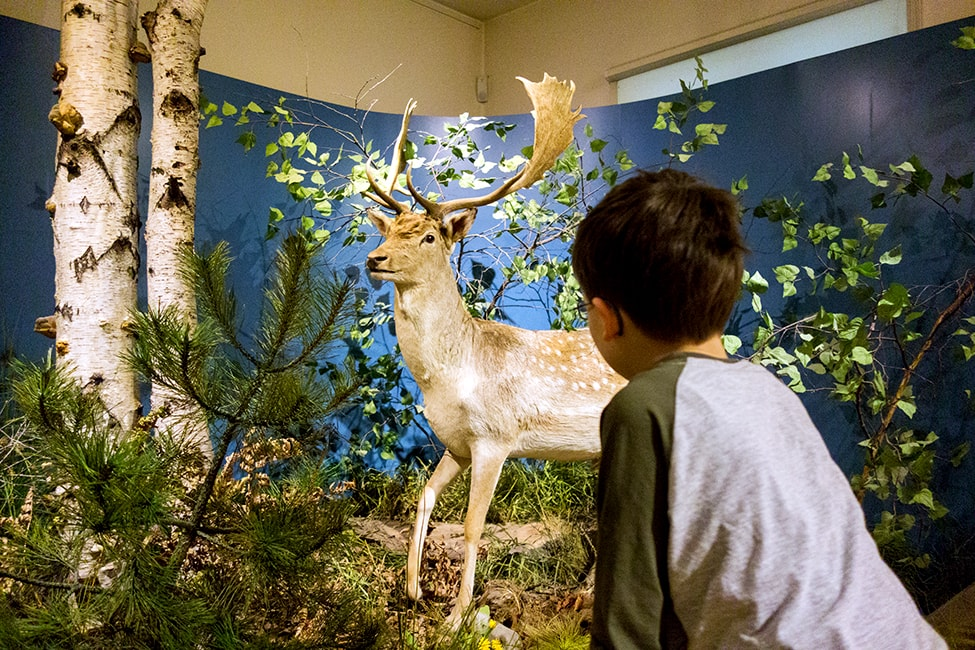 Naturkundemuseum Potsdam Familienführung
