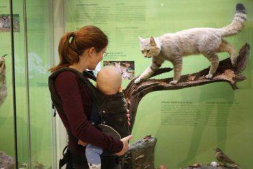 Naturkundemuseum Potsdam Baby Kleinkind