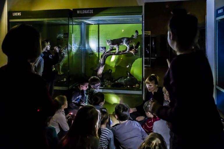 Naturkundemuseum Potsdam Taschenlampenführung