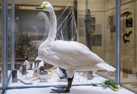 naturkundemuseum potsdam weihnachten