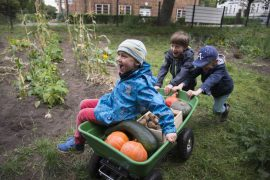 GemüseAckerdemie Potsdam Schulgarten Kita