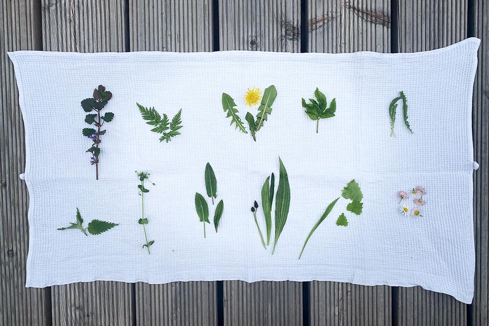 Wildkräuter sammeln Frühling Rezepte