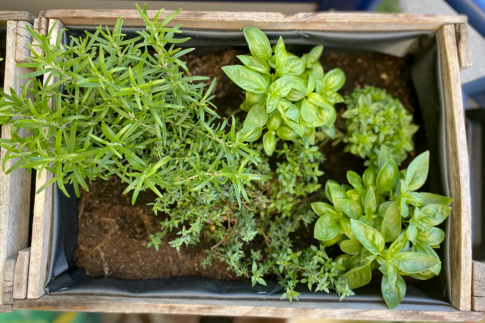 Hochbeet DIY Garten