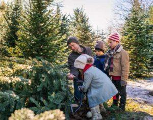 werderaner tannenhof weihnachtsbaum tannenbaum