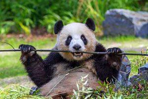 zoo berlin ausflug potsdam panda