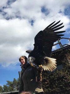 falkenhof potsdam flugshow tierpark zoo wildpark