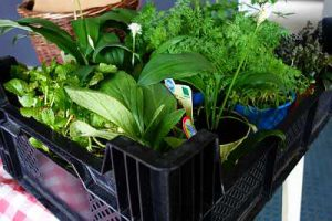 marktschwärmerei potsdam rechenzentrum markt bio regional