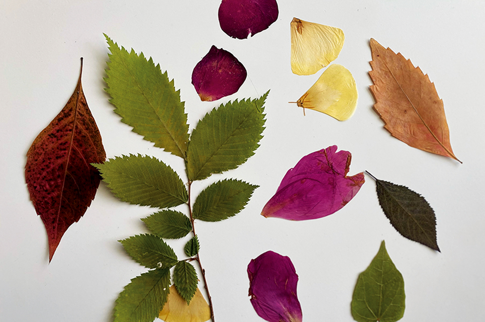 Basteln mit Naturmaterialien Blätter Käfer