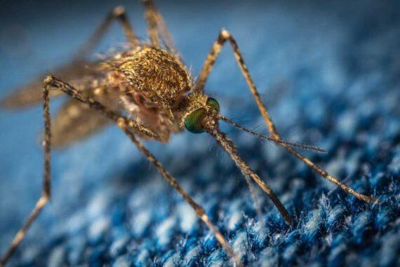 insektenstich mücke wespe biene zecke schutz erste hilfe