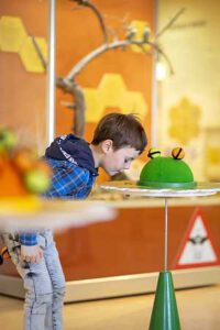 naturkundemuseum potsdam mensch biene ausstellung