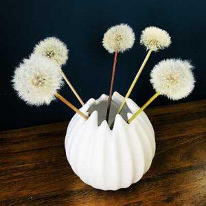 pusteblumen konservieren haltbar anleitung