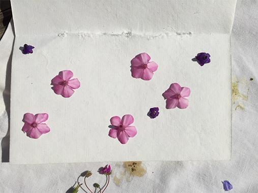 Blütendruck Blumendruck DIY Sommer